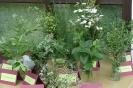 Wild- und Gartenkräuter